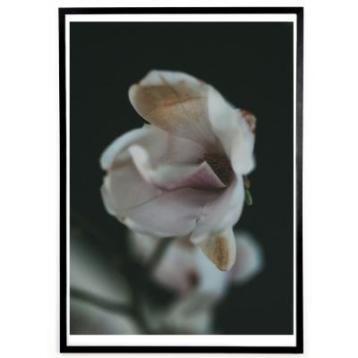 applicata - Norph Magnolia Poster