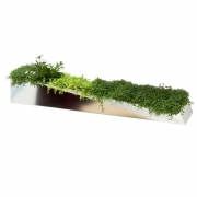 Compagnie - Mirroir en Herbe Flower Pot