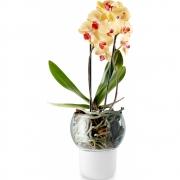 Eva Solo - Pot orchidées verre