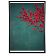 applicata - Norph Red Ilex Poster 40 x 30 cm