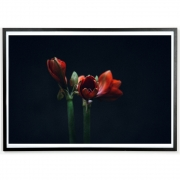 applicata - Norph Dark Red Poster
