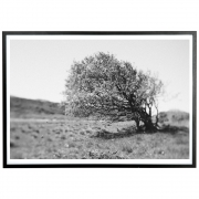 applicata - Norph Windy Tree Poster
